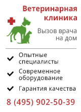 Vetclinica